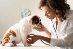 Ai pregatit lista de intrebari pentru medicul tau veterinar?